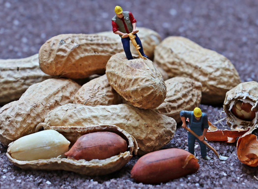 Miniaturbauarbeiter auf Erdnüssen